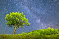 Green tree Milky way night sky Comet mode