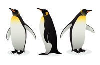 Flock Of Emperor Penguins on white background