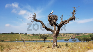 Landschaft mit Storchenbaum im Alentejo in Portugal