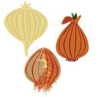 trio of organic onions, vintage food style illustration