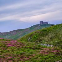 Massif of Pip Ivan mountain with the ruins of the observatory on top. Rhododendron flowers on slope.
