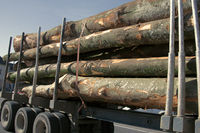 Timber truck with load of tree trunks