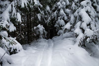 Ski walking track in the forest