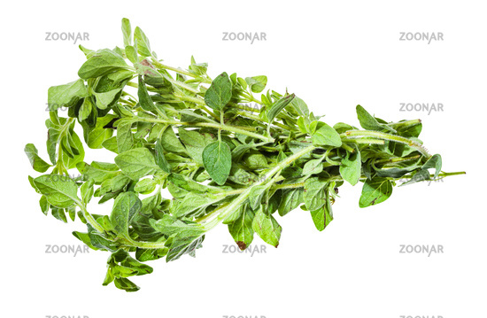 bunch of fresh Oregano herb isolated on white