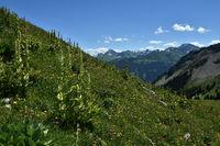 Kanisalpe im Bregenzerwald bei Mellau; Aufstieg zur Kanisfluh; Vorarlberg; Oesterreich;