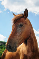 Red horse head portrait