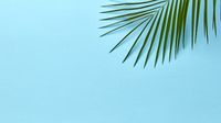 Green palm leaf on a blue background with copy space. Layout for your ideas. Flat lay