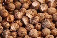 Walnuts in a pile