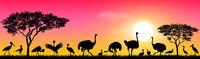 Birds of the African savannah