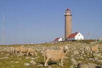 Leuchtturm Lysta Fyr