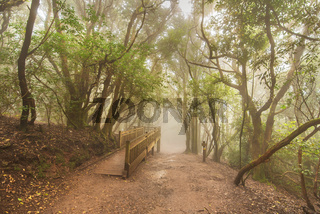 Misty forest in Anaga mountains