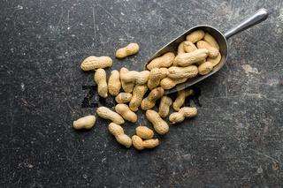 The dried peanuts.