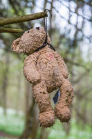 Teddy bear hanging in a tree