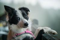 Hund am Balkon