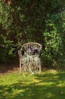 Der alte Stuhl