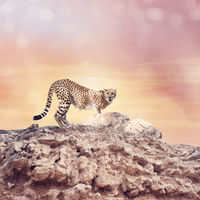 Cheetah standing on a top of rocks