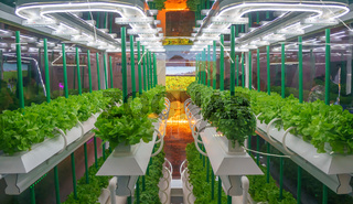 Soilless culture of vegetables under artificial light. Organic hydroponic vegetable garden. LED light Indoor farm, Agriculture Technology. Inside a warehouse without the need for sunlight