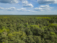 green forest Aerial