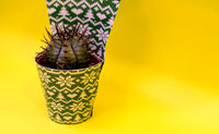 Small Cactus in a pot in the package