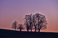 Baumgruppe bei Sonnenaufgang auf der Schwäbischen Alb