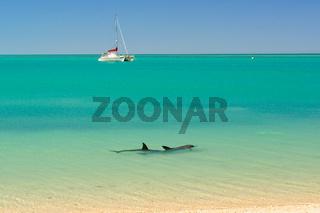 Dolphins - Shark Bay Marine Reserve