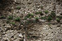 Pflanzen in den Mauerritzen