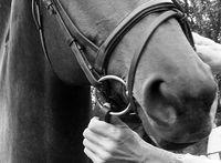 stirrups on a horse