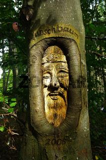 Holzschnitzerei in Buchenstamm im Wald