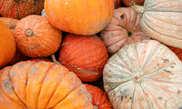 We know fall is here when displays full of Pumpkins and Gourds show up at market