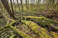 Wald_02.tif