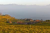 Das Weinanbaugebiet Lavaux am Genfersee im Herbst, Rivaz, Lavaux, Waadt, Schweiz