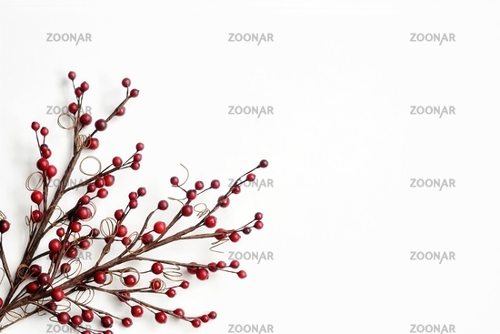 branch berries on white background