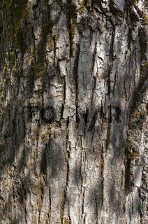 ,tree bark