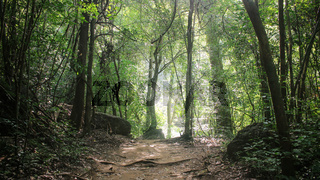 Peaceful moment of solitude at Erawan National Park, in Kanchanaburi province, Thailand.