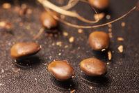 Nahaufnahme roher Samen der Gleditsia triacanthos