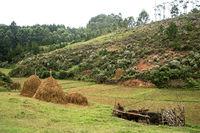 Reisanbau, Analamanga Region, Madagaskar