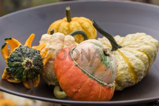 Bunte Zierkürbisse in einer flachen Metallschale im Garten - Herbstdekoration