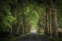 Country road running through tree alley