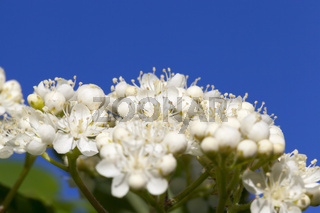 white small flowers