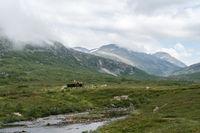 Passtraße zum Trollstigen