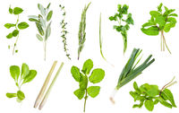 various fresh twigs of edible greens isolated