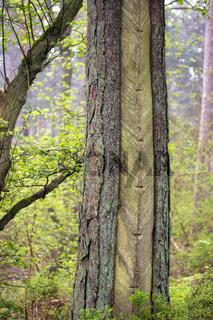 Darsser Wald 001. Fischland Darss Zingst. Deutschland