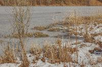 Uferzone am See