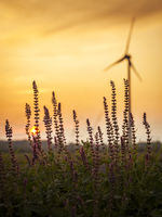 Windmill generator at sunset in a field with flowers