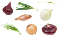 various onion vegetables isolated on white
