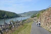 Wanderweg bei Assmannshausen