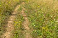 Path through the green meadow
