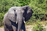 Journey to Africa. Elephant - single