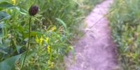 Flower and grass beside a narrow trail