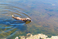 Ile de Ré - Swimming dog in salt water